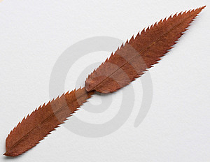 Slash Symbol Stock Images - Image: 325584