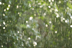 Rain illuminated by a sunlight Stock Images