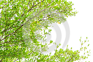 Leaf and tree Stock Images