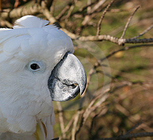 Sunny Beak Royalty Free Stock Photography - Image: 3223447