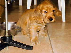 The Small Sad Puppy. Royalty Free Stock Images - Image: 3229539