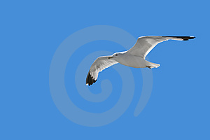 Soaring Seagull Stock Images - Image: 3231204