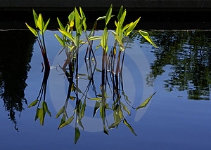 Water Grasses A Royalty Free Stock Photo - Image: 3240425