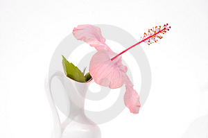 Tropical Flower In A Vase Stock Image - Image: 3244621