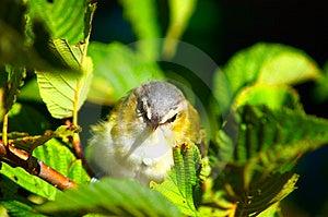 Крупный план птицы Стоковая Фотография - изображение: 3258052