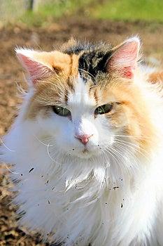 Feline Stock Images - Image: 3280344