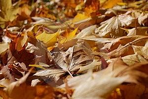 Autumn Stock Photography - Image: 3284502