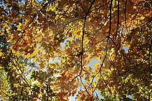 Autumn Royalty Free Stock Photos - Image: 3284598