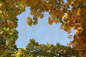 Autumn Royalty Free Stock Photos - Image: 3284608