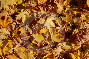 Autumn Stock Photo - Image: 3284620