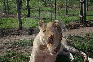Captive Life Royalty Free Stock Photo - Image: 3296165