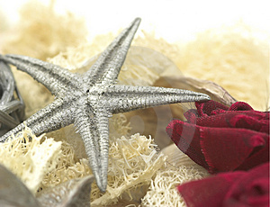 Starfish Royalty Free Stock Image - Image: 334836