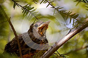 Baby bird background-1 Royalty Free Stock Images