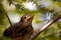 Baby bird background-1