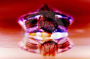 Scary χελώνα Στοκ εικόνα με δικαίωμα ελεύθερης χρήσης - εικόνα: 3330156