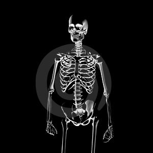 X-Ray: skeleton Royalty Free Stock Photography