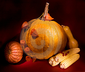 Autumn Harvest Stock Photo - Image: 3383070