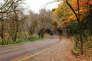 Curve In Autumn Woods Royalty Free Stock Photography - Image: 3425117