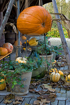 Autum Pumpkin Decoration Stock Photo - Image: 3431720