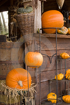 Autum Pumpkin Decoration Stock Photos - Image: 3431873