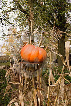 Pumpkin Garden Decoration Stock Photo - Image: 3431980