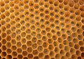 Honey texture Royalty Free Stock Images
