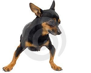 Isolated Funny Dog Stock Photos - Image: 3472843