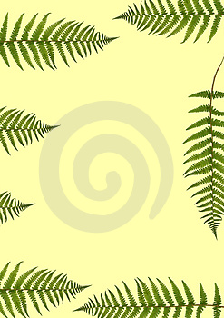 Seven Fern Leaves Royalty Free Stock Photos - Image: 3502018