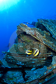 Fish Duo On Wreck Stock Image - Image: 3516351