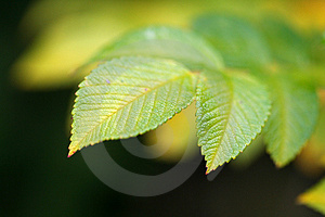 Green Vivid Leaf With Copyspace Stock Images - Image: 3517894