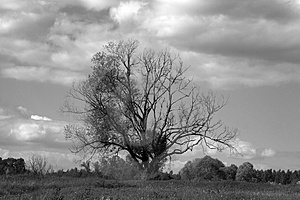 Tree Lonely In Field Royalty Free Stock Images - Image: 3518979