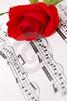 Red silky rose Royalty Free Stock Photo