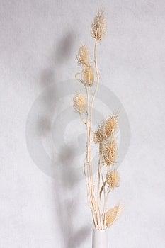 Dry Flower Stock Photo - Image: 3526840