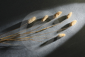 Dry Flower Stock Images - Image: 3526904