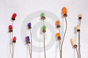 Dry Flower Royalty Free Stock Image - Image: 3527026
