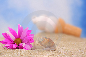 Sea Shell And Flower Royalty Free Stock Image - Image: 3546716