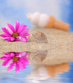 Sea Shell And Flower Stock Image - Image: 3546721