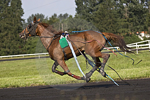 Troter After Accident Stock Image - Image: 3549611