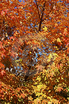 Autumn Colors Stock Images - Image: 3587234