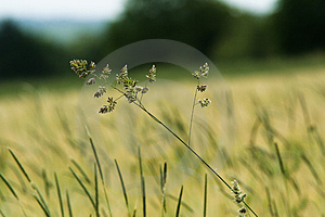 Grass Summer Field Royalty Free Stock Photos