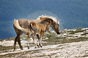 Two Horses Stock Photo - Image: 3592080