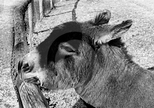 Portrait Of A Donkey Stock Photo - Image: 364610
