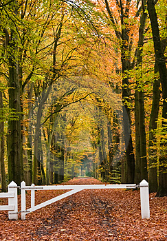 Forest lane Stock Photos