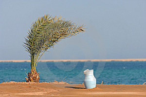 Palm In The Desert By The Sea Royalty Free Stock Photography - Image: 3606987
