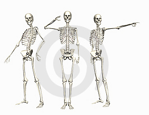 3 skeletons Royalty Free Stock Photo