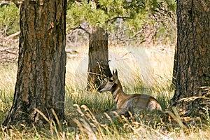 Отдыхая антилопа Стоковое Изображение - изображение: 3629401