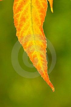 Foliage Stock Photo - Image: 3634460