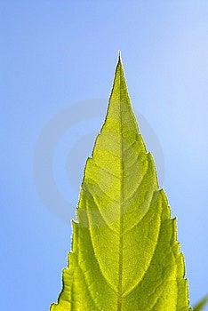 Foliage Royalty Free Stock Photos - Image: 3642698