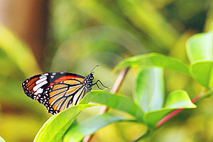 Butterfly Like A Queen Royalty Free Stock Photo - Image: 3663725