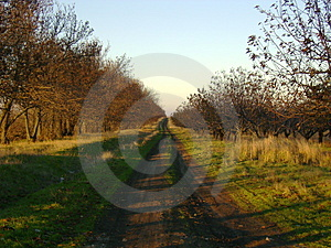 Country-track Way Stock Images - Image: 3679964